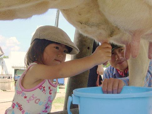 あんこちゃんの乳搾り体験